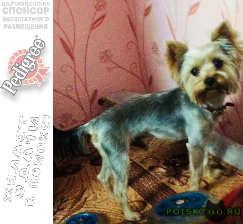 Пропала собака кобель г.Константиновск