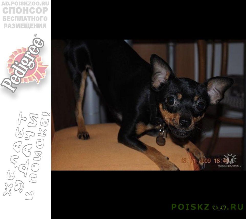 Пропала собака кобель поиски продолжаются г.Москва