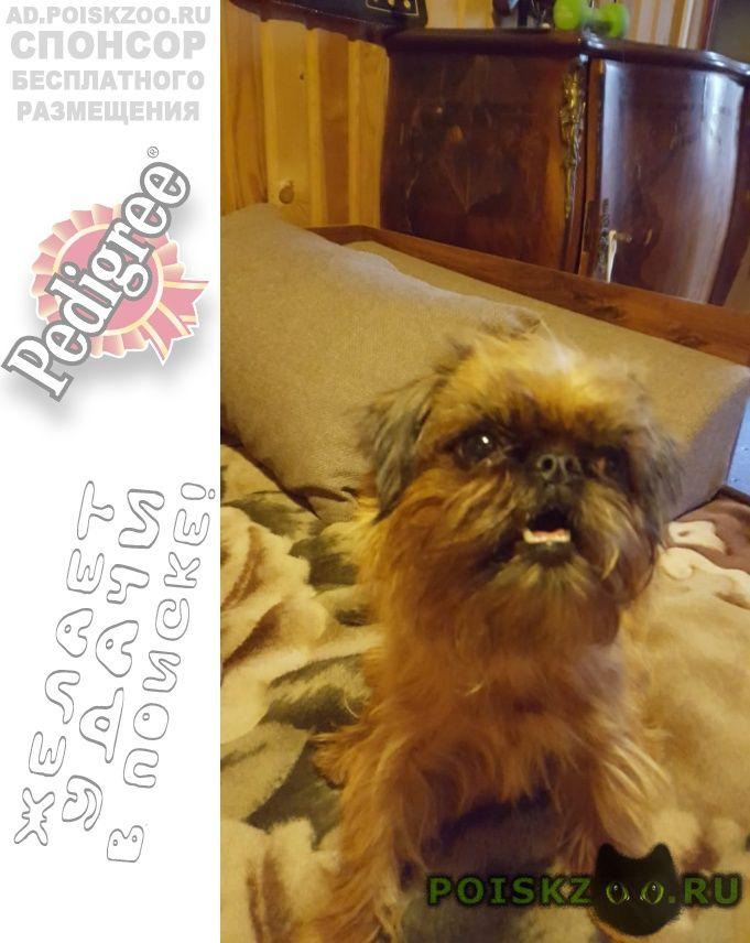 Пропала собака г.Орехово-Зуево