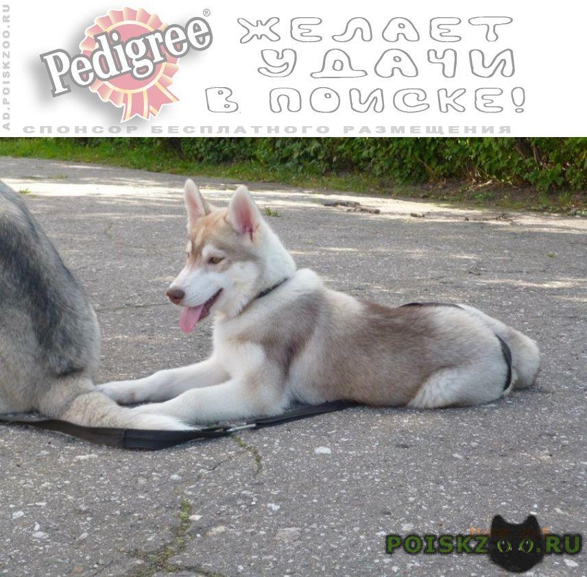 Пропала собака не теряем надежды г.Нижний Новгород