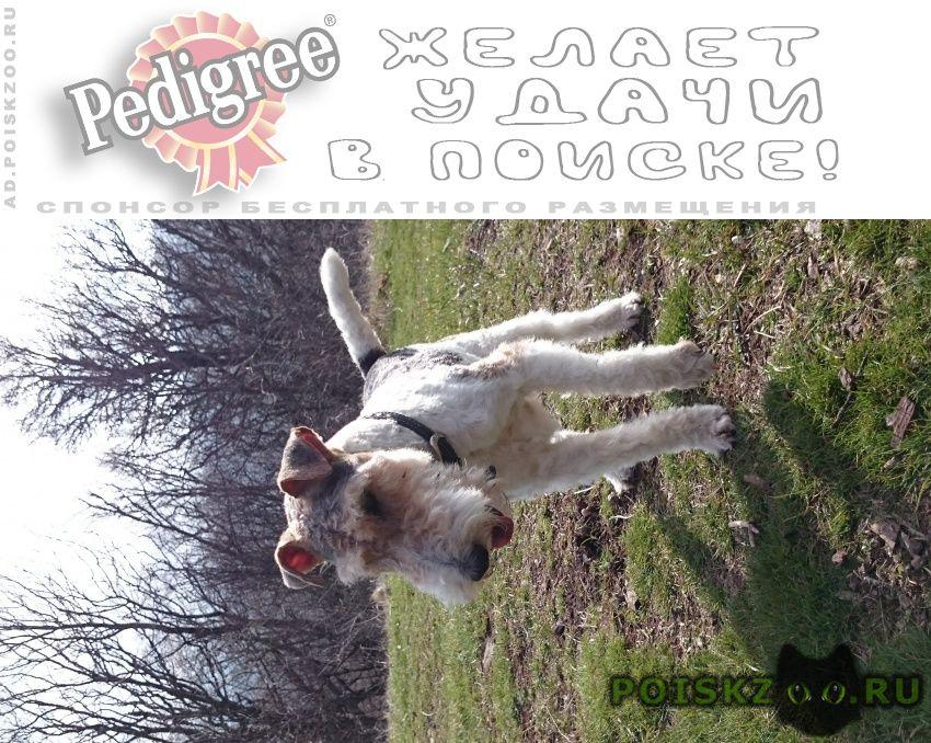 Пропала собака кобель г.Симферополь