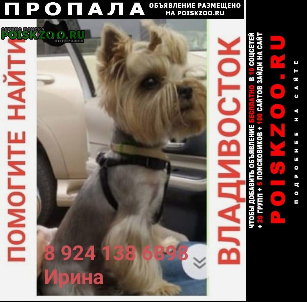 Пропала собака кобель Владивосток