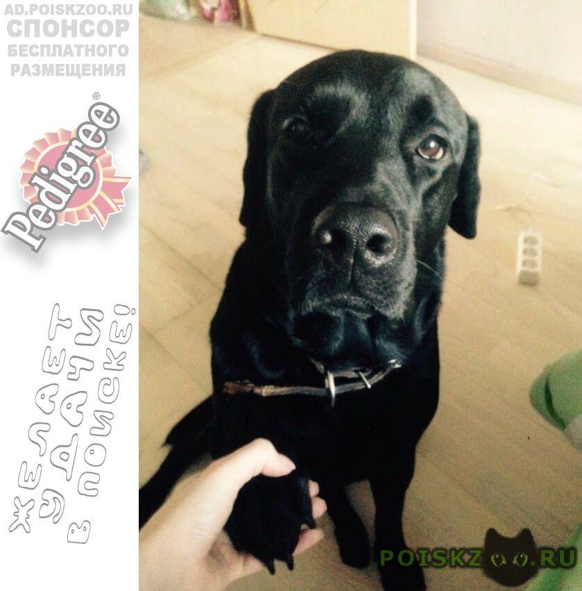 Пропала собака кобель г.Вологда
