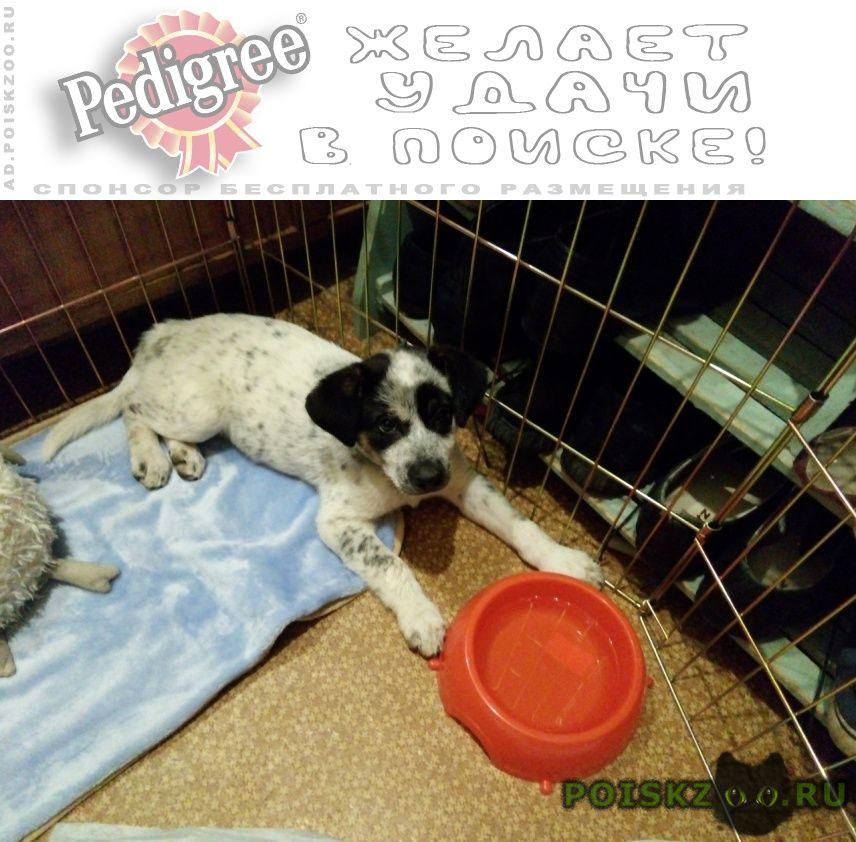 Пропала собака щенок, 2 мес г.Калуга