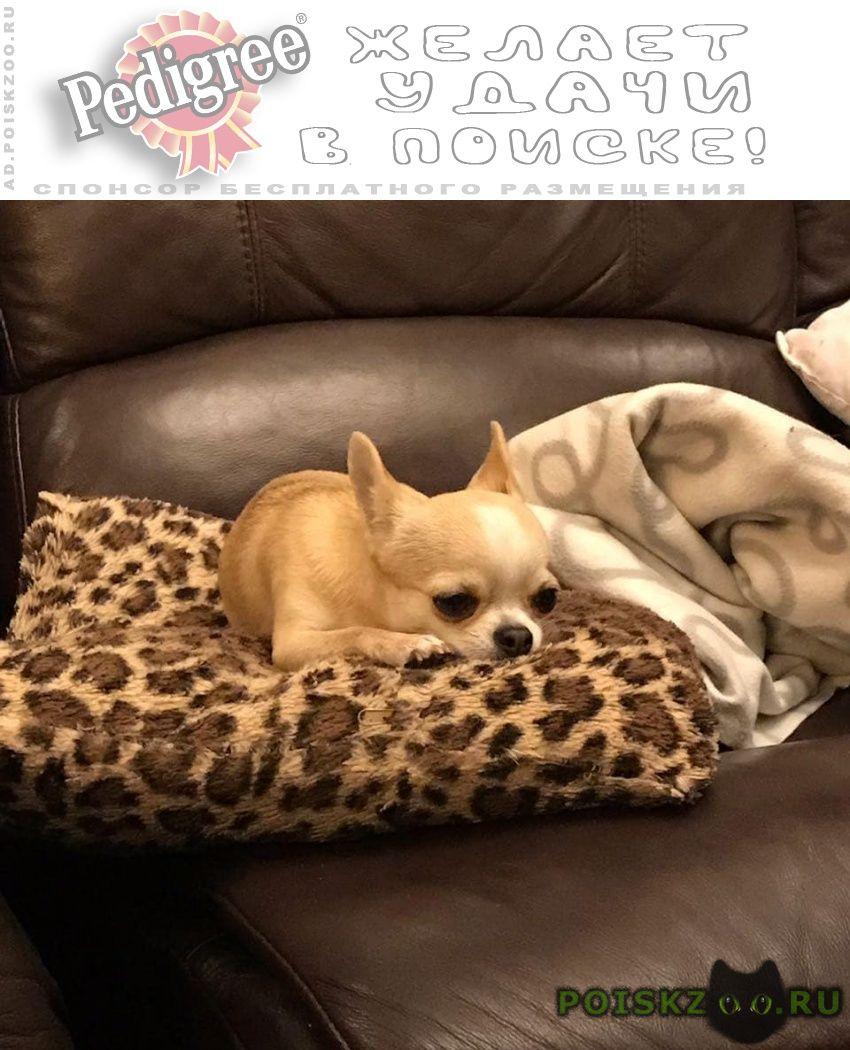 Пропала собака г.Ступино