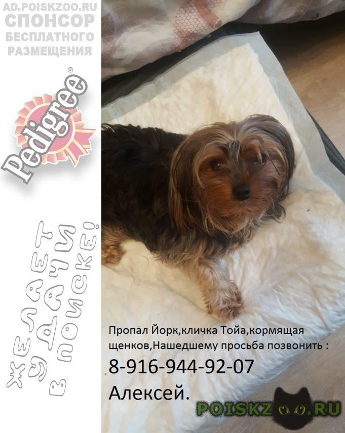 Пропала собака г.Москва
