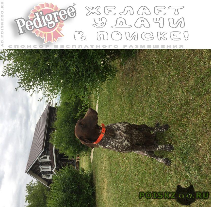 Пропала собака кобель г.Лебедянь