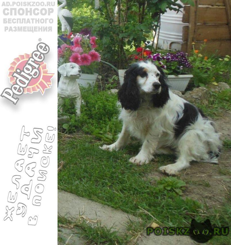 Пропала собака г.Феодосия