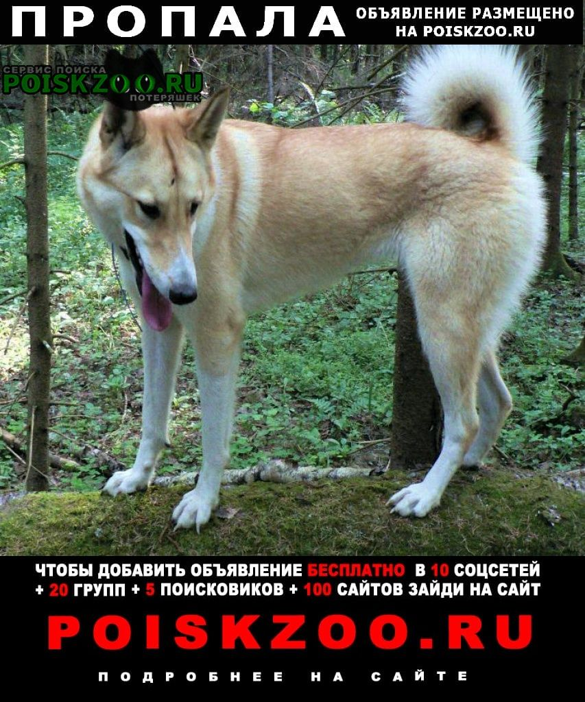 Пропала собака потерялaсь лайка Истра
