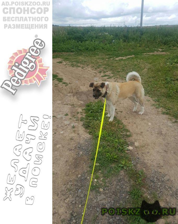 Пропала собака г.Домодедово