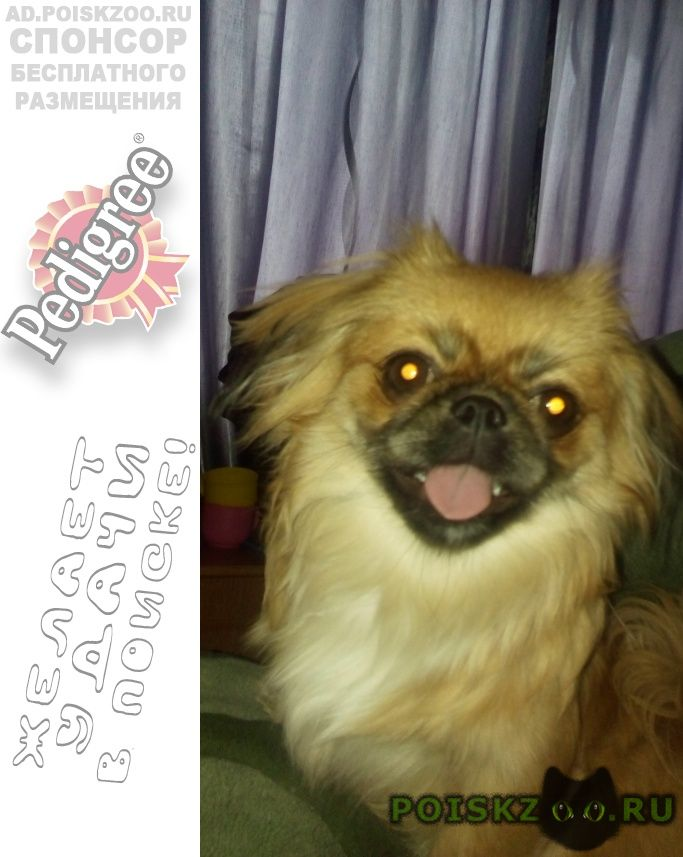 Пропала собака любимая ребенка г.Брянск