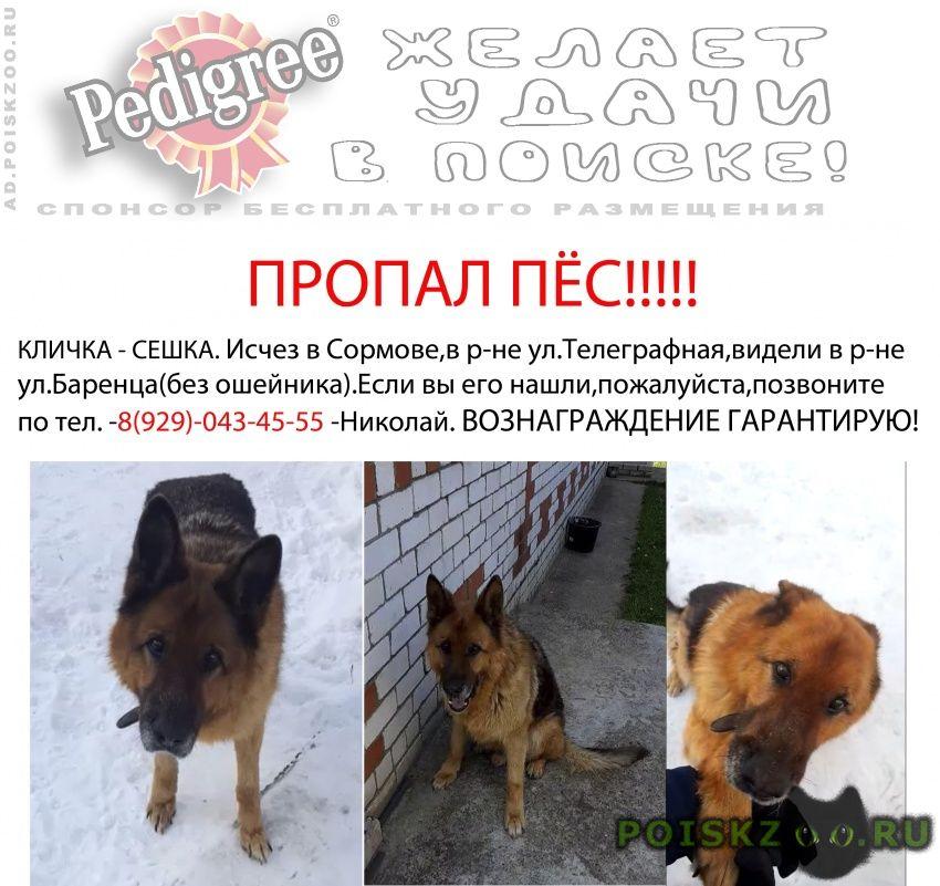 Пропала собака кобель очень ждут и не теряют надежды г.Нижний Новгород