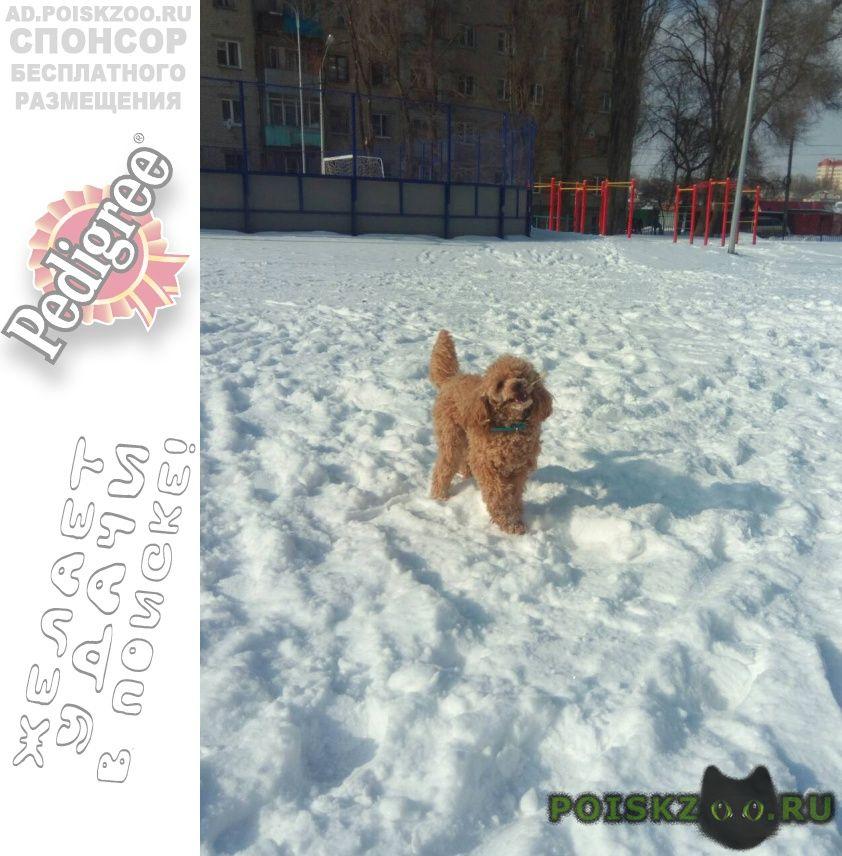 Пропала собака кобель sos г.Воронеж