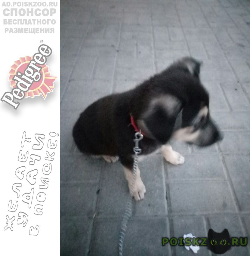 Пропала собака г.Старый Оскол