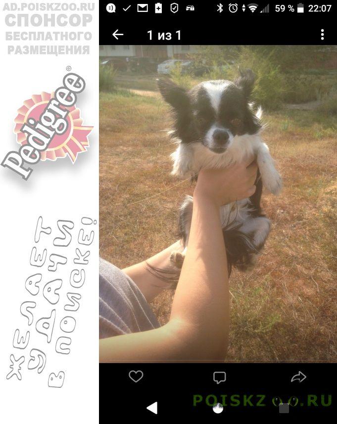 Пропала собака кобель помогите г.Оренбург