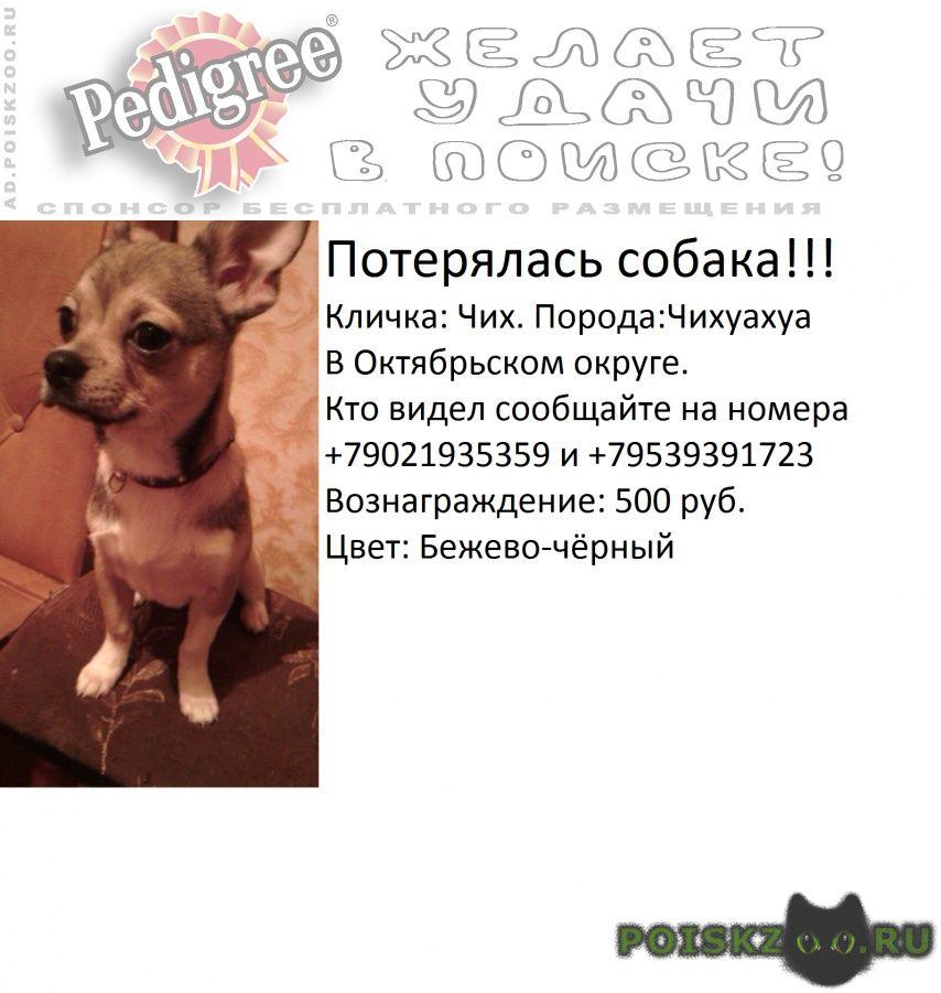 Пропала собака кобель вознагрождение:500руб г.Архангельск