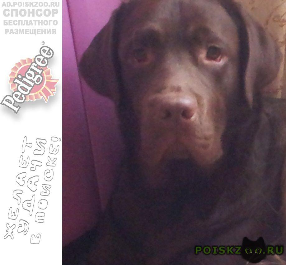 Пропала собака кобель г.Чехов