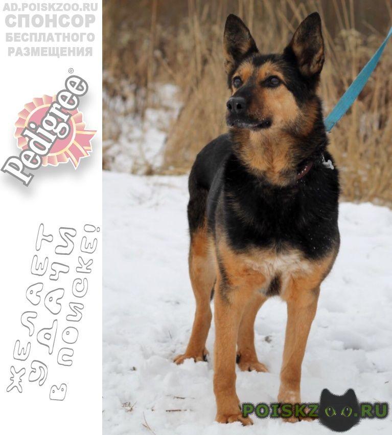Пропала собака помогите найти ланочку г.Пущино