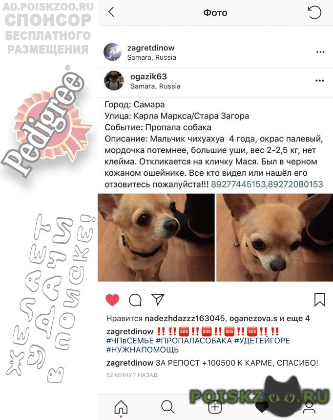 Пропала собака кобель 🆘🆘🆘‼ г.Самара