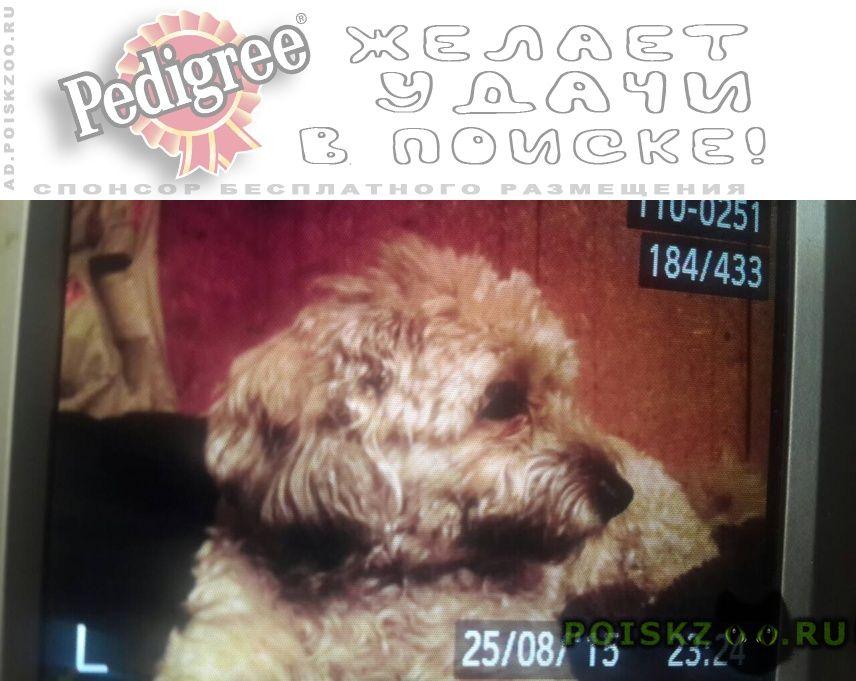 Пропала собака василина г.Красноярск