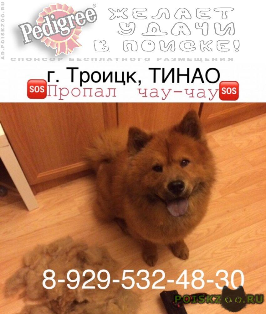 Пропала собака кобель вознаграждение гарантировано г.Троицк