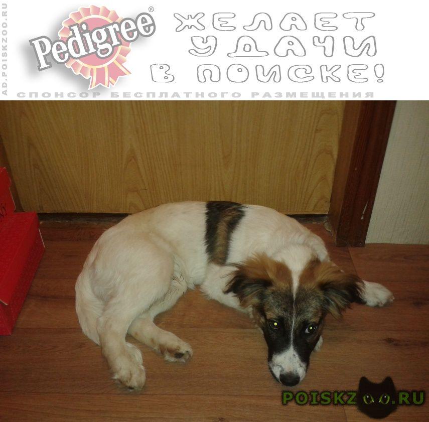 Пропала собака кобель г.Геленджик