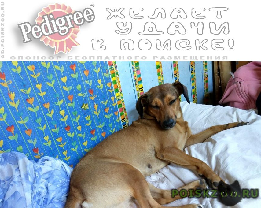 Пропала собака уехала на электричке без ошейника г.Александров