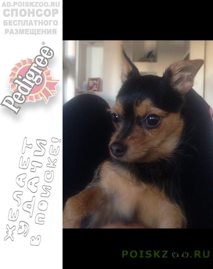 Пропала собака г.Пушкино