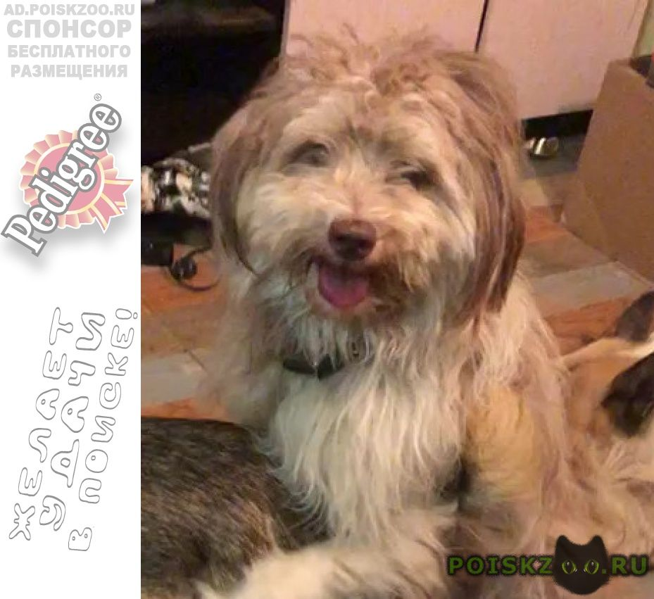 Пропала собака кобель в селе шарапово, московская обл г.Москва