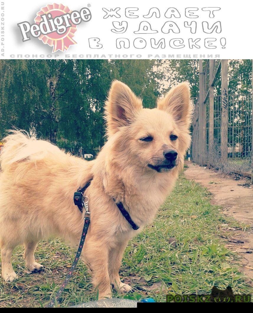 Пропала собака г.Ярославль