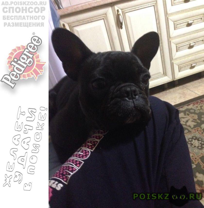 Пропала собака г.Новочеркасск