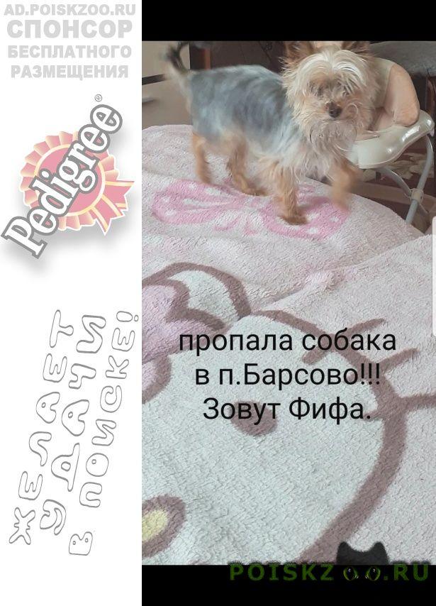 Пропала собака г.Киржач