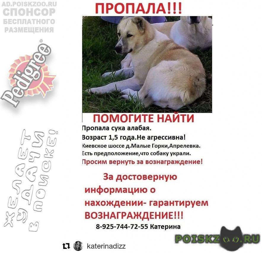 Пропала собака  г.Апрелевка
