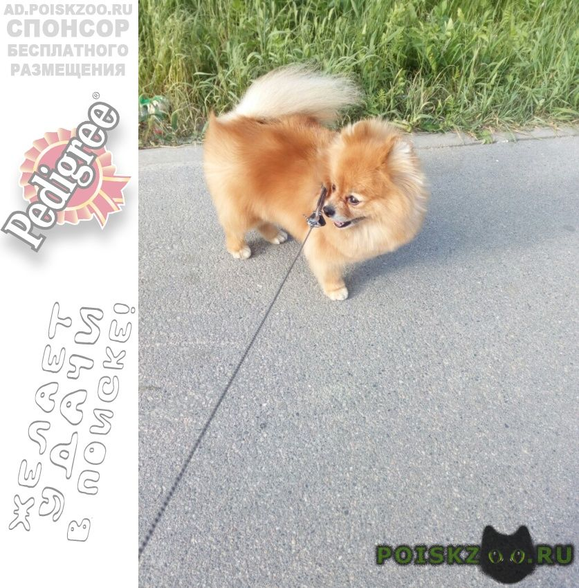 Пропала собака 🆘🆘🆘 г.Санкт-Петербург