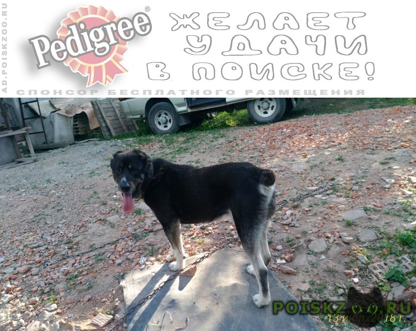Пропала собака кобель (алабай) г.Тула