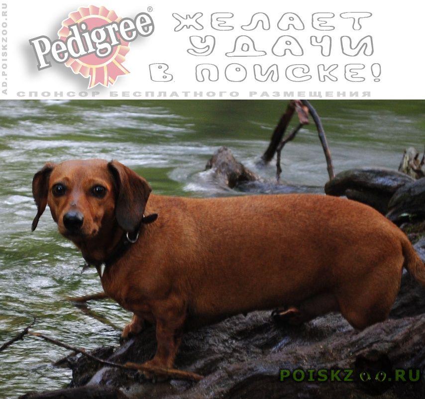 Пропала собака г.Севастополь