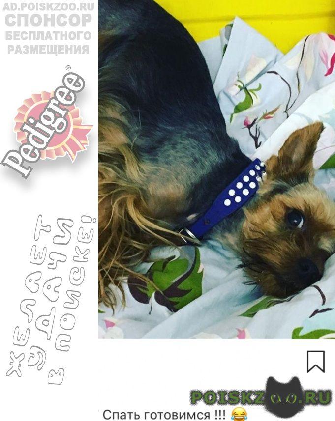 Пропала собака кобель г.Ставрополь