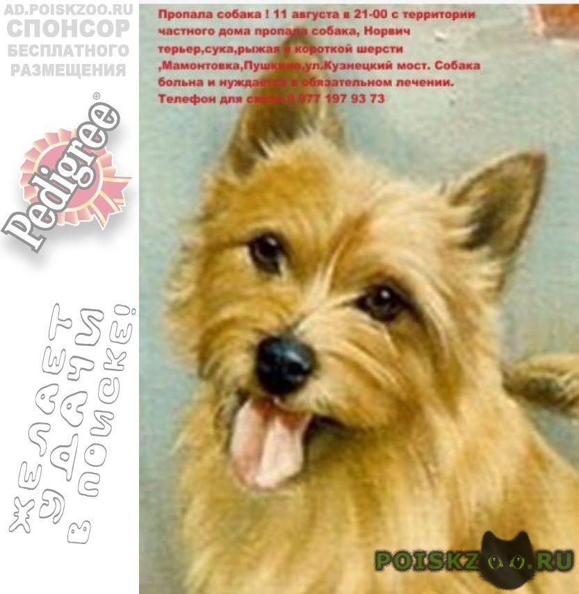 Пропала собака помогите г.Пушкино