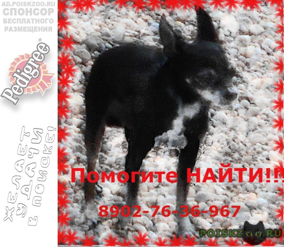 Пропала собака кобель помогите найти    г.Ангарск