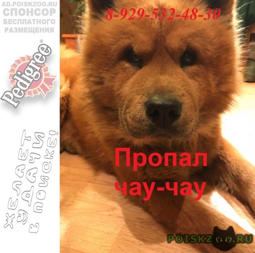 Пропала собака кобель г.Троицк