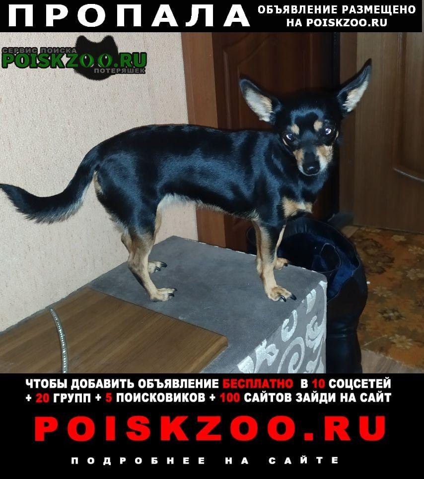 Пропала собака Новосибирск