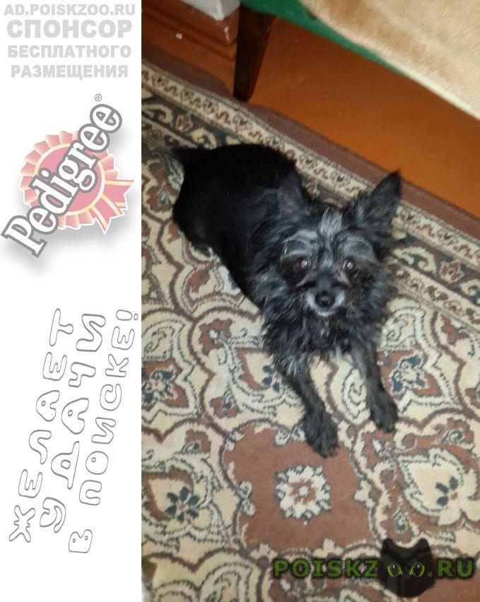 Пропала собака кобель член семьи   г.Москва