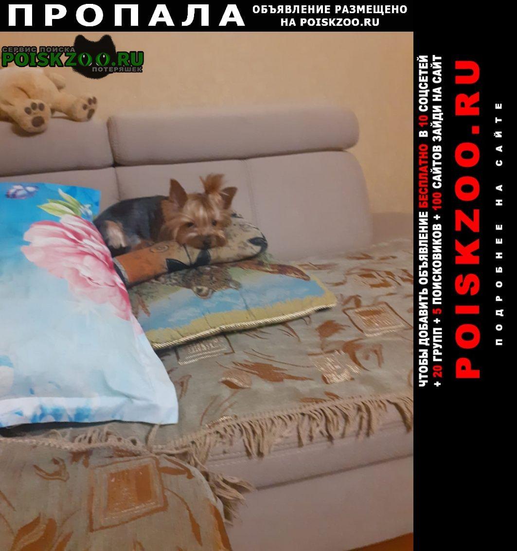 Пропала собака Черняховск