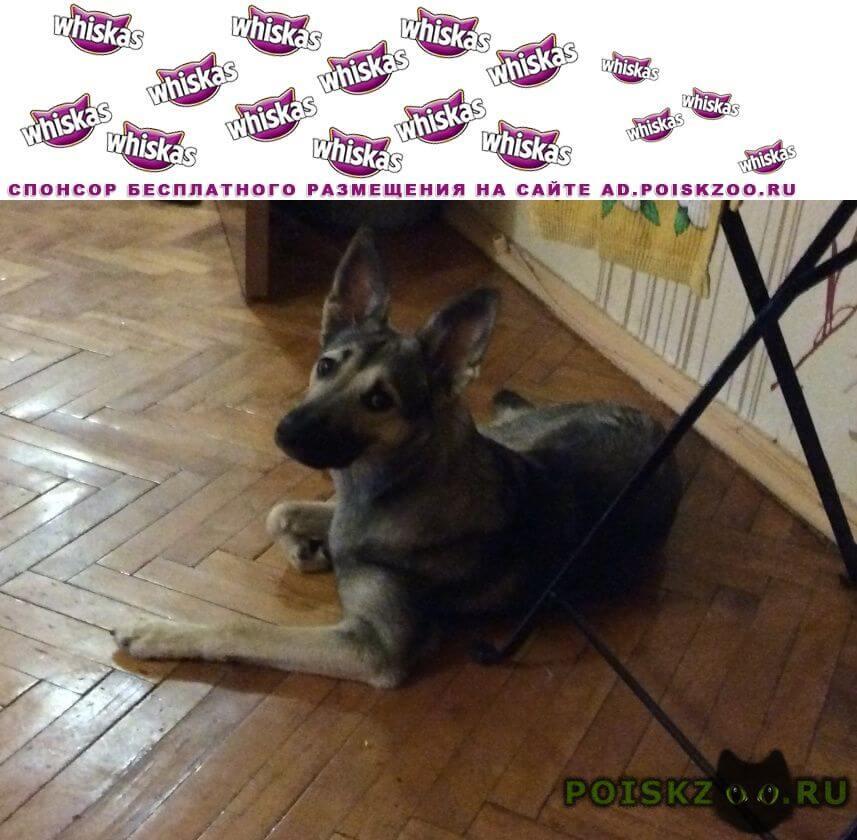 Пропала собака очень скучаем и переживаем г.Зеленоград