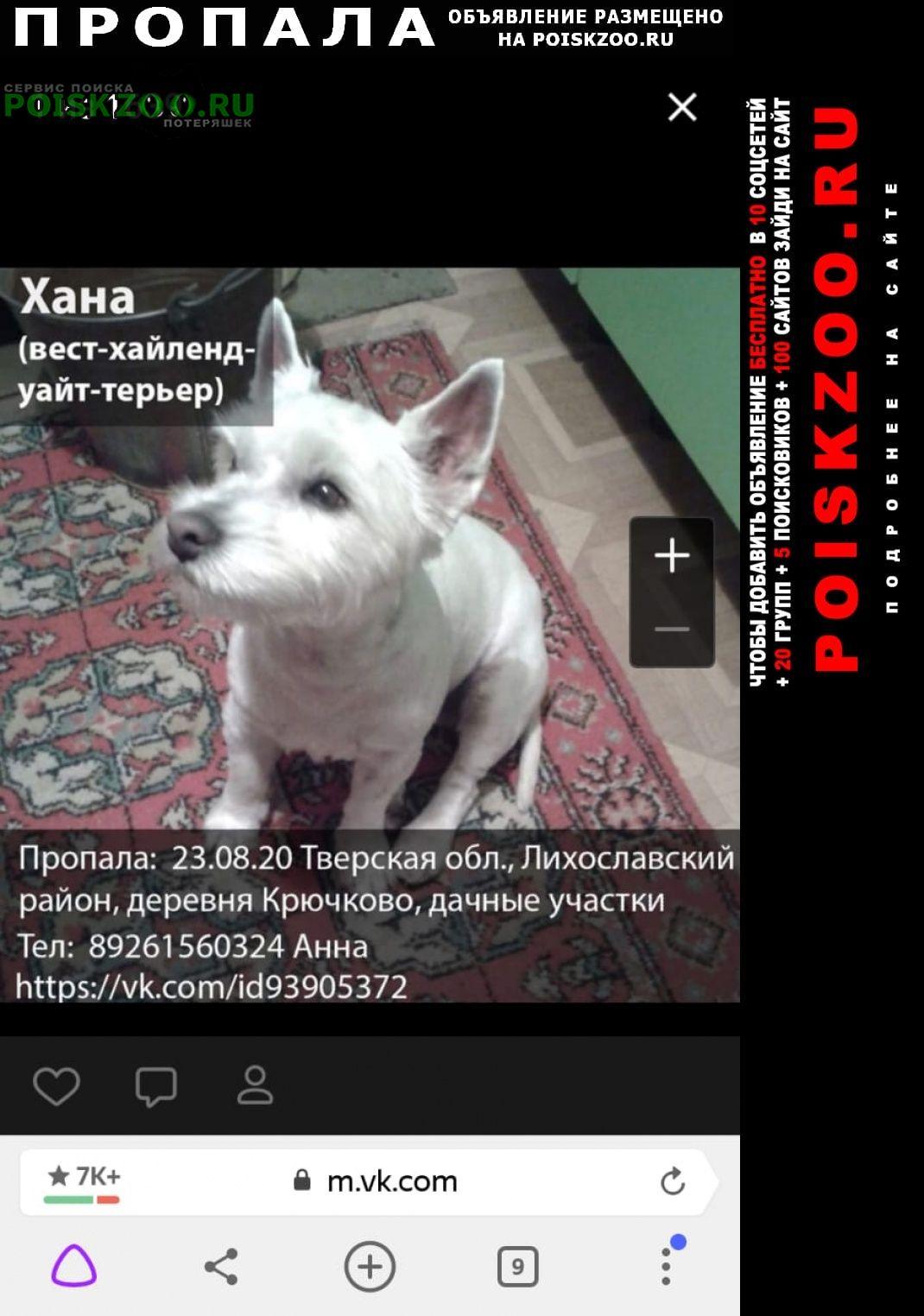 Пропала собака Лихославль