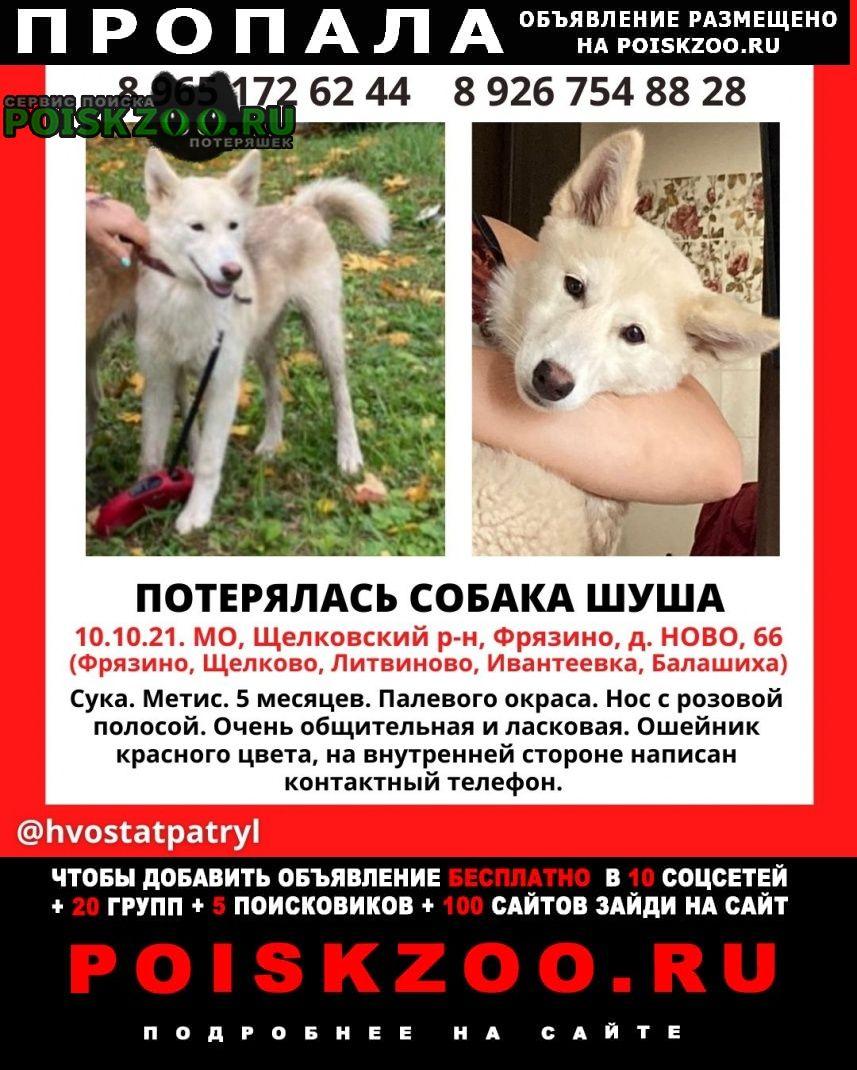 Пропала собака красный ошейник Фрязино