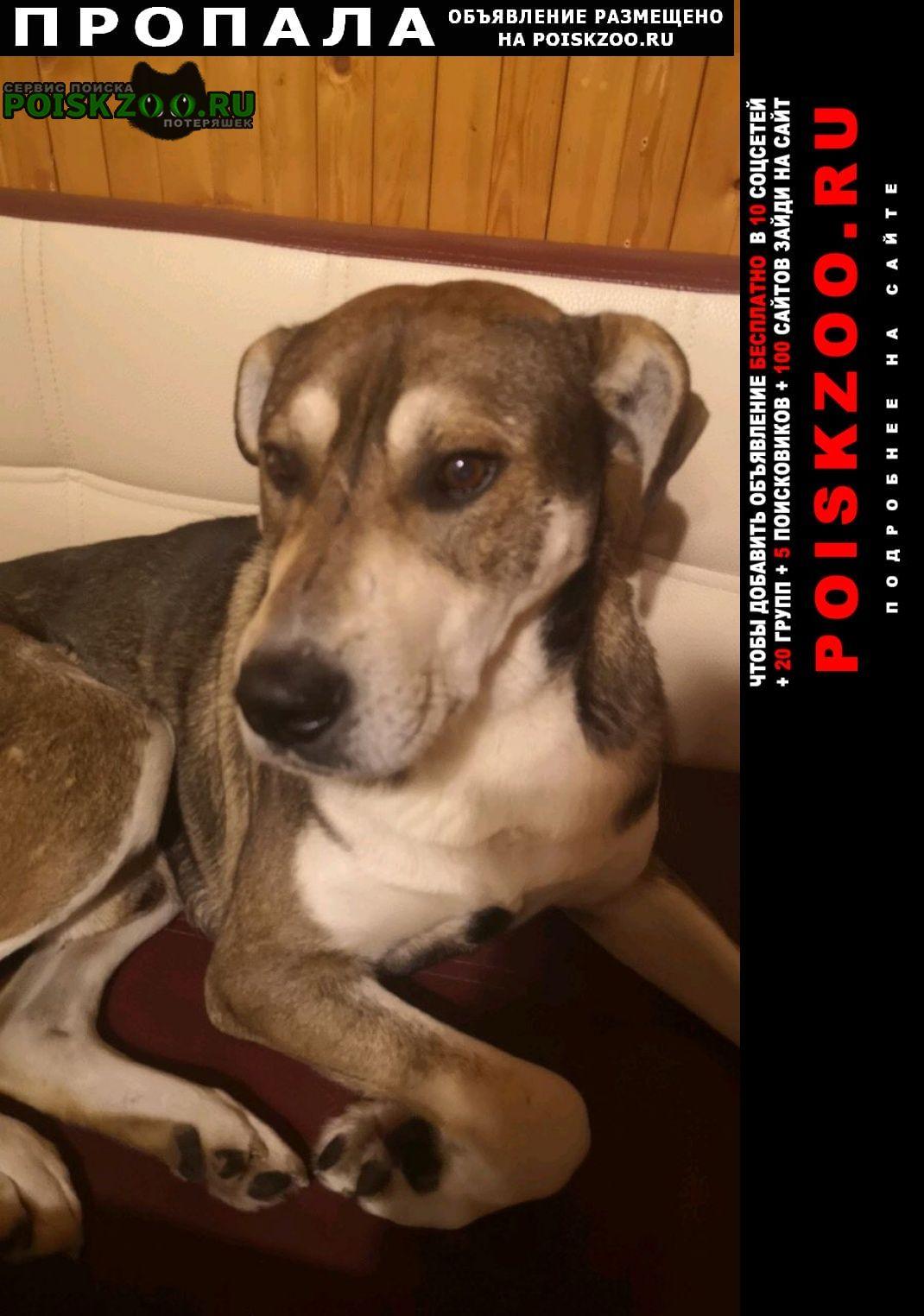 Ступино Пропала собака кобель помогите найти друга