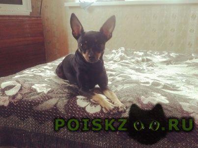 Пропала собака г.Томск