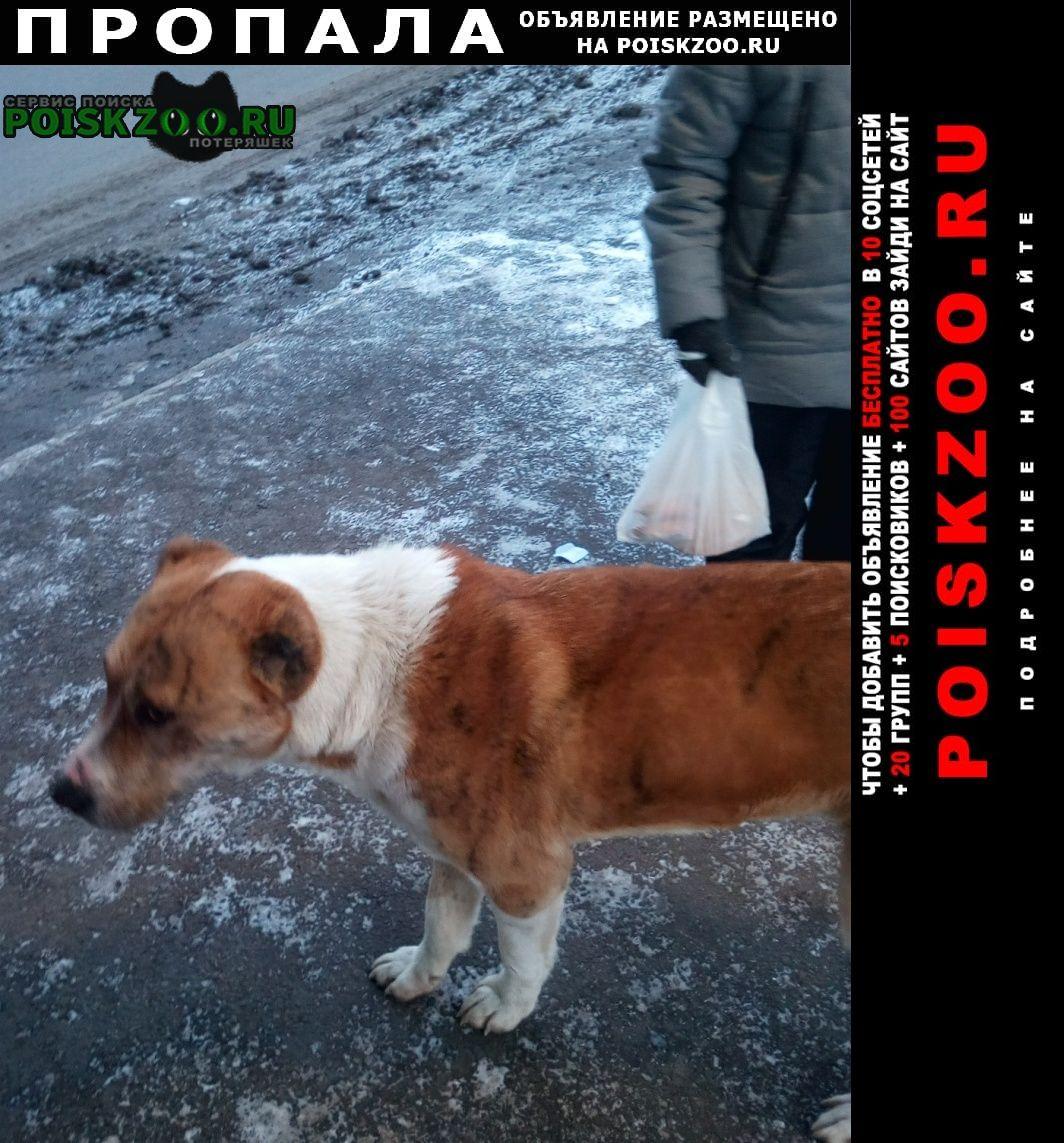Пропала собака Красноярск