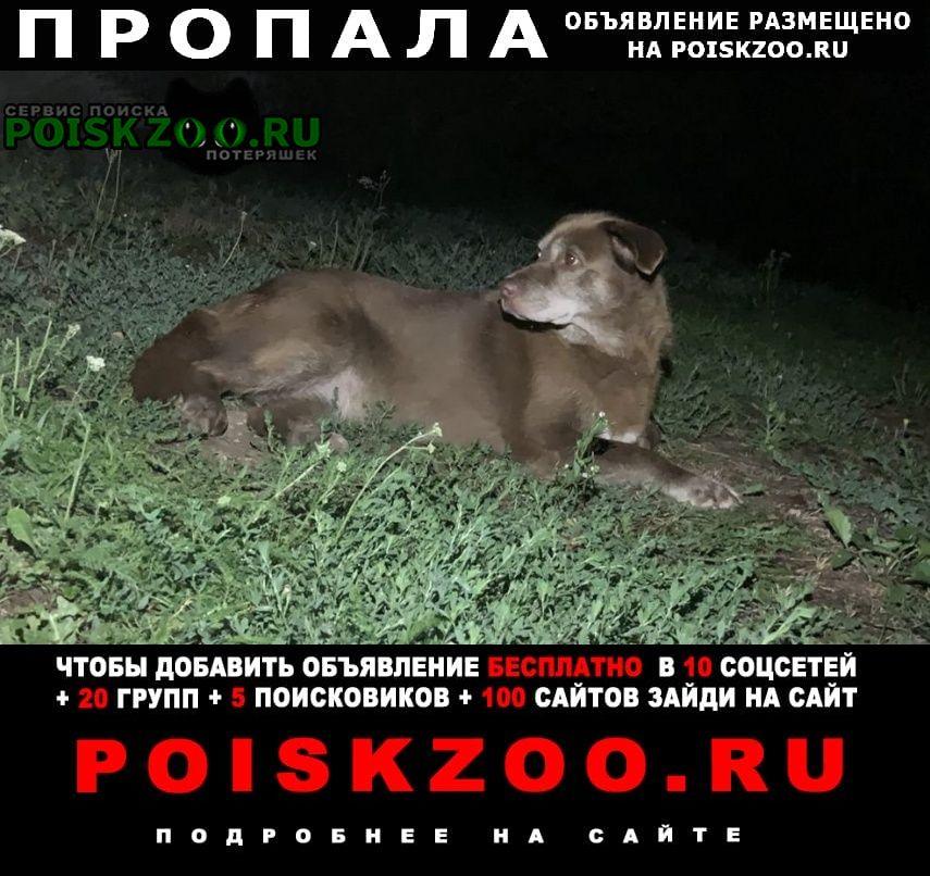 Пропала собака венёвский район: п.студенец, улыбышево Венев